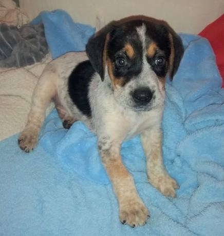 Marley Pup