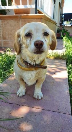 Jasper Boo